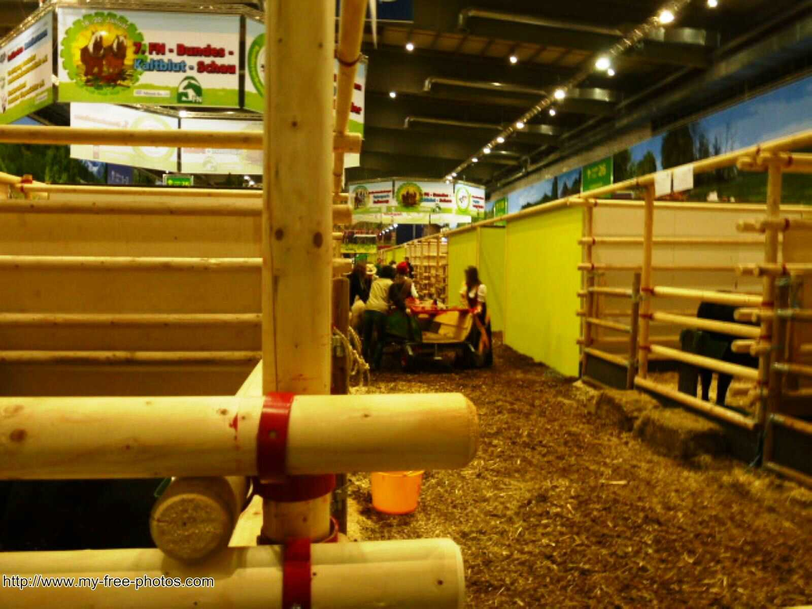 cattle exhibition