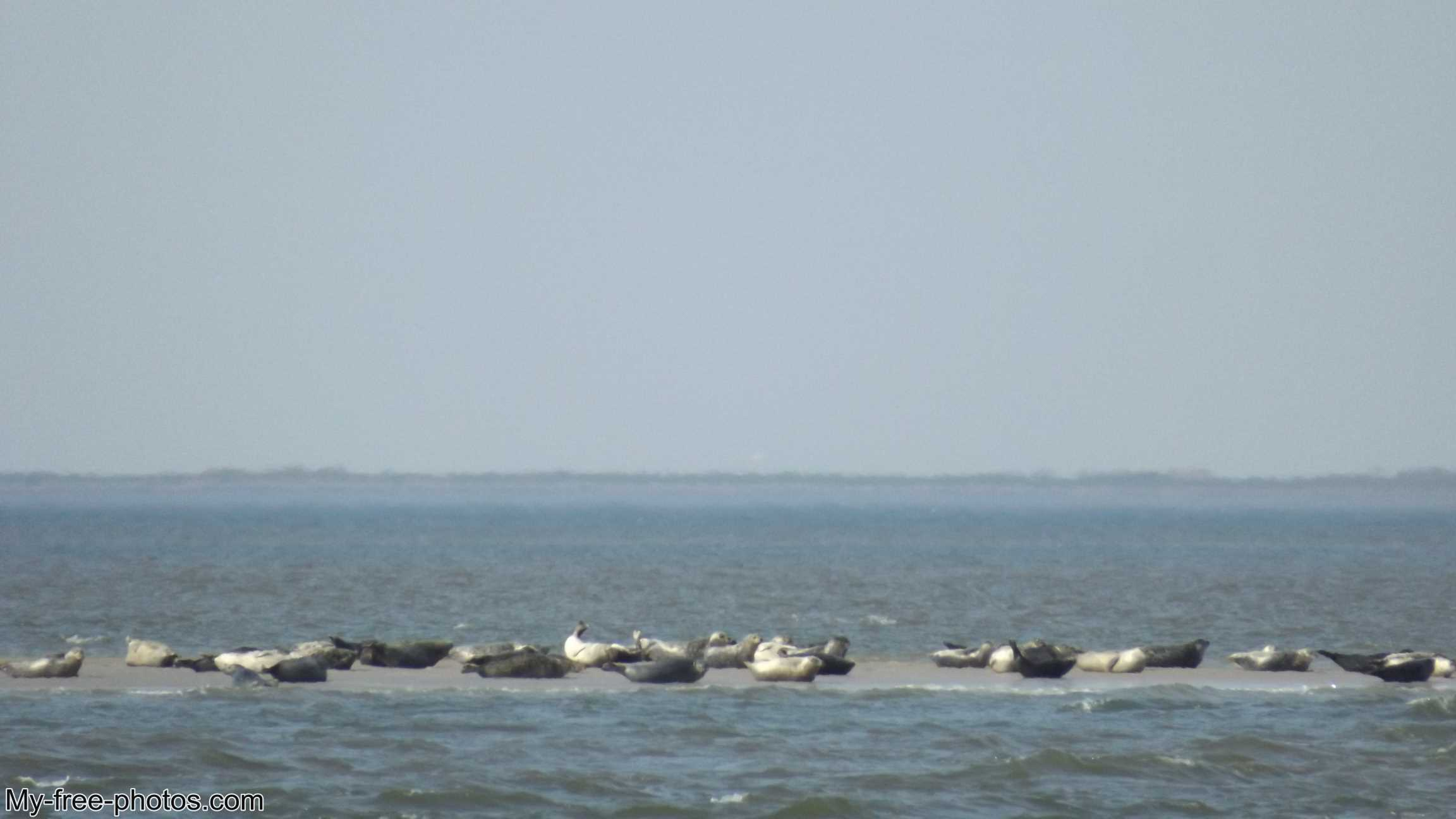 seals on a sandbank