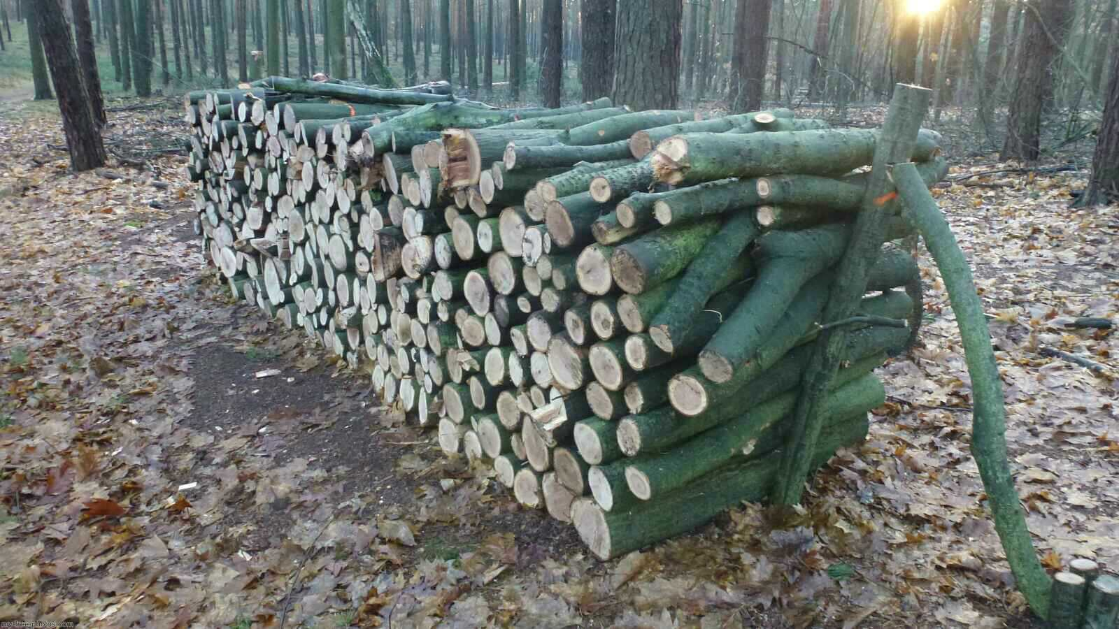 Logging in the Berliner forest.