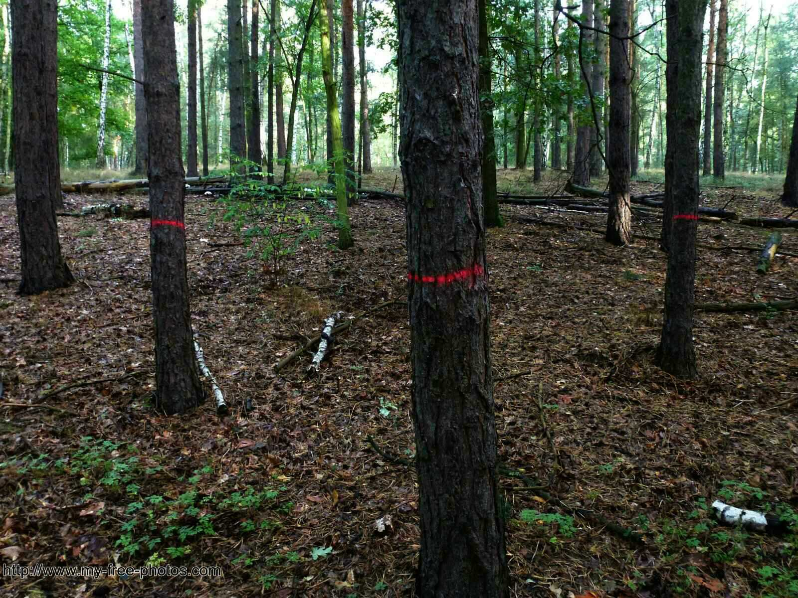 trees,marked