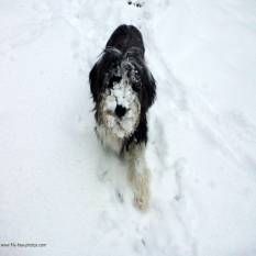 dogt in snow